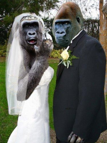 брак обезьян