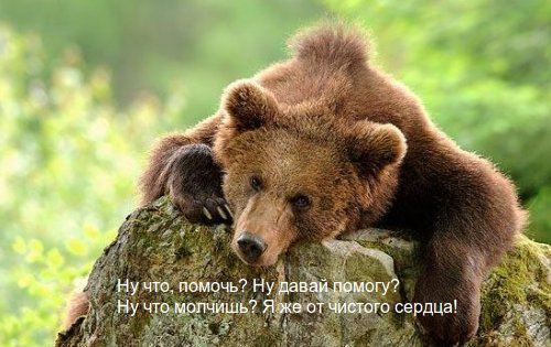 медвежья услуга